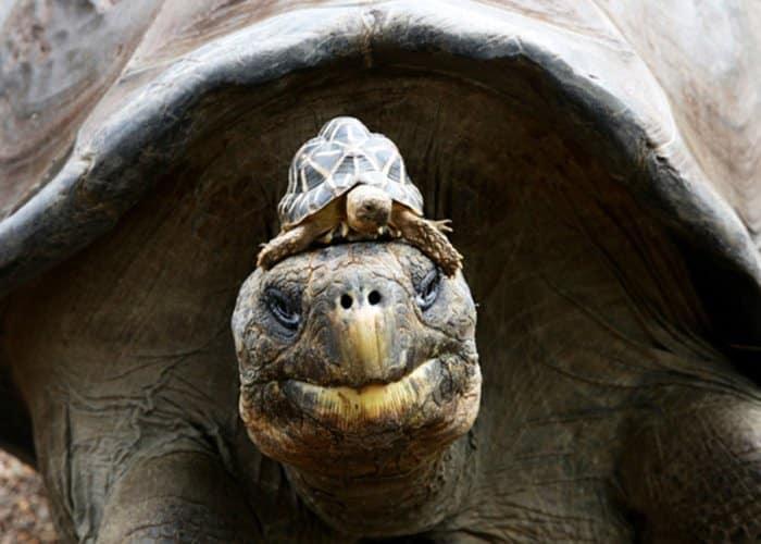 Animales más longevos del mundo